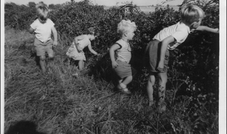 Children picking blackberries