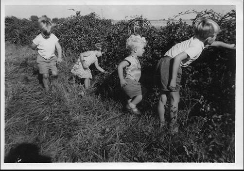 Children picking blackberries