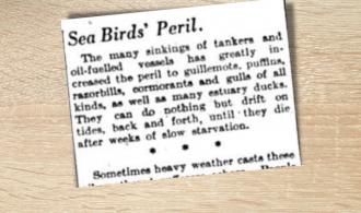 Sea Birds' Peril